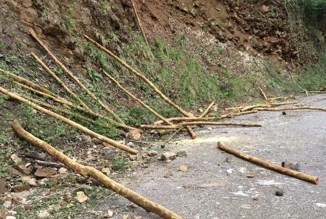 Bartın'da İki kardeş, koruma altındaki 40 ağacı keserken yakalandı