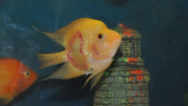 Bu balığı gören hayrete düşüyor