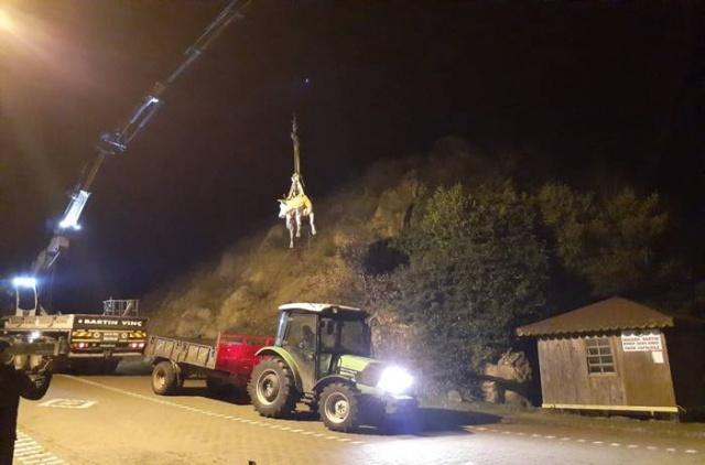 Bartın'da yamaçtan yuvarlanan inek böyle kurtarıldı