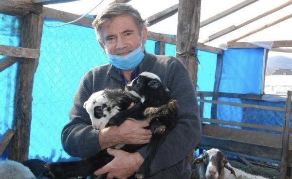 Memleketi Bartın'a Yerleşip Beşiz Doğuran Koyun Yetiştiriyor