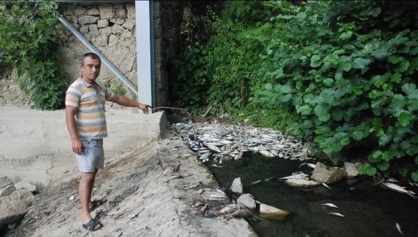 Bartın'da Toplu Balık Ölümleri