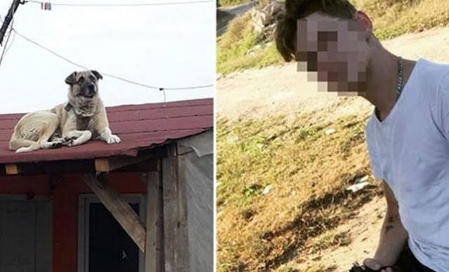 Bartın'da komşusunun köpeğini tüfekle vuran gence ceza