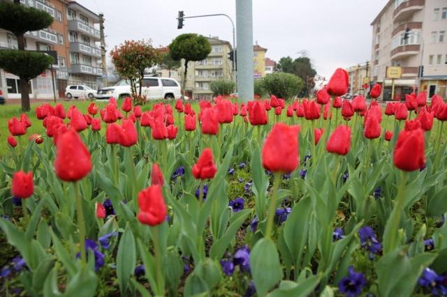Bartın'da 55 Bin Lale Çiçek Açtı
