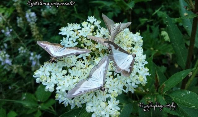 Bartın'da Zararlı Böceklere Işıklı Tuzak