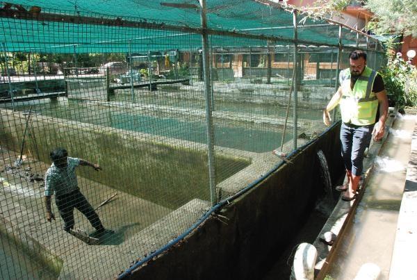 Bartın'da Alabalık Tesisi Sele Gitti, Zarar Büyük
