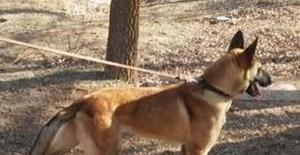 Bartın'da Bomba Arama ve İz Sürme Köpekleri Görevde