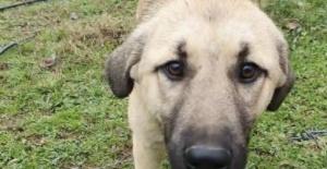 Bacağı tele takılan köpeğin imdadına yetişti
