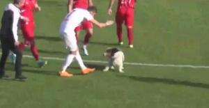 Bartın'da Sahaya giren köpek maçı durdurdu
