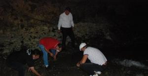 Bartın'da balıklar gölet açılarak kurtarıldı