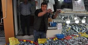 Amasra'da Hamsi Bolluğu