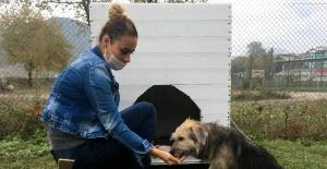 Bartın'da köpeği sopayla döven şahıstan şikayetçi oldular