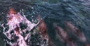 Bartınlı Balıkçı Teknesiyle Yarışan Yunusları Görüntüledi