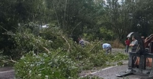 Bartın'da rüzgar ağaçları devirdi, çatıyı uçurdu: 1 yaralı