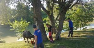 Bartın Irmağı'nda düşen manda, AFAD ve itfaiye ekiplerince kurtarıldı