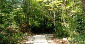 Bartın'da Gürcüoluk Mağarası'na yürüyüş yolu ve piknik alanı