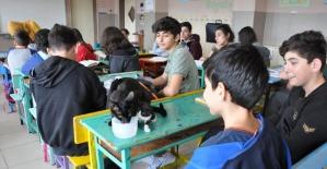 Bartın'da Öğrenciler, kedileri okulda besliyor