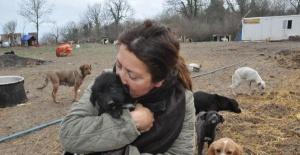Bartın'da 500 köpeğin yaşadığı barınak için yıkım kararı