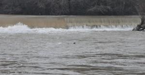 Bartın Irmağı'nda 2 su samuru görüldü
