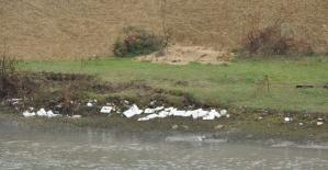 Bartın Irmağı'na atılan plastik tabaklar için araştırma