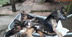 Bartın'da 6 köpek ölü bulundu