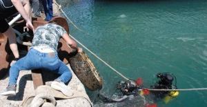 Amasra'da denizden 1 saatte 20 çuval çöp çıkardılar