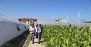 Bartın'da Mahkumlar Sebze yetiştiriyor