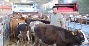 Bartın'da Genç Çiftçilere Hayvanları Teslim Edildi