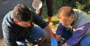 Bartın'da köpeklerin saldırdığı karacayı süpürgeyle kurtardı
