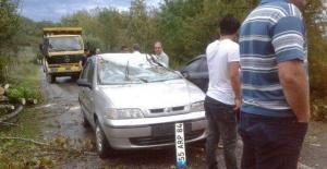 Bartın'da Fırtına ağaçları devirdi: 4 Yaralı