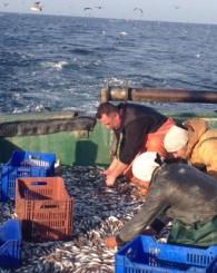 Amasralı Balıkçı Feci Şekilde Can Verdi