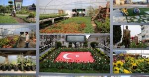Bartın'a 887 Bin 532 Bitki Dikildi