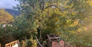 Bartın'da ceviz toplamak için çıktığı ağaçtan düşüp, öldü