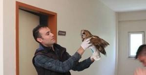 Bartın'da Mahsur kalan baykuş kurtarıldı