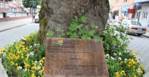 Bartın'da Anıt Ağaca Tanıtım Tabelası