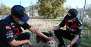Bartın'da sopayla dövülen köpeğe jandarma sahip çıktı
