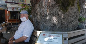 Bartın'da vatandaşlar 4 asırlık ağacın gölgesinde seriliyor