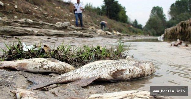 Esrarengiz Balık Ölümleri