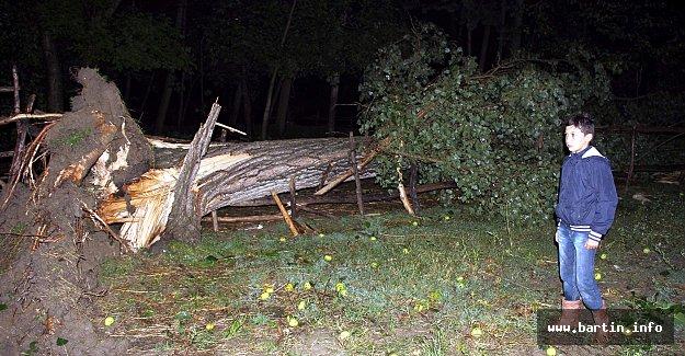 Şiddetli Fırtına, Ağaçları Devirdi