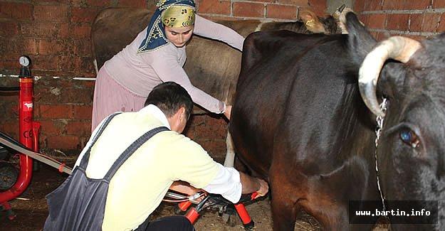 Uygulamalı Süt Sığırcılığı Yetiştiricisi Kursu