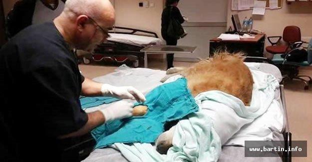 Hastanede ameliyat ettiği köpeğe ötenazi uygulayan doktora suç duyurusu