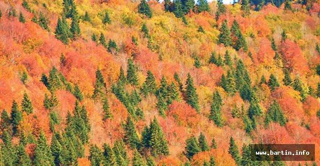 Küre Dağları'nda Renk Cümbüşü