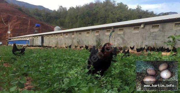 sahibinden satılık çiftlik