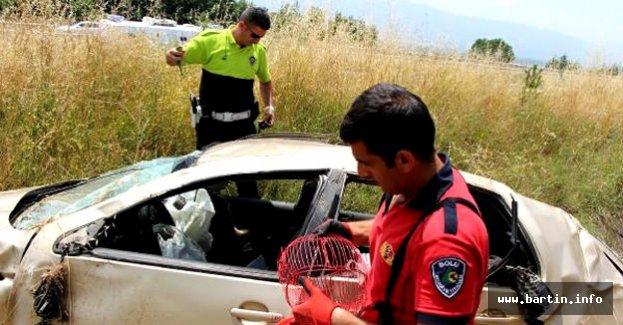 Yaralı sürücü muhabbet kuşunun kurtarılmasını istedi