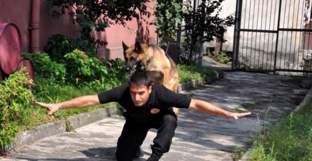 AFAD köpekleri her an göreve hazır