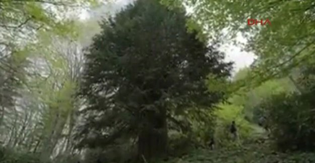 Kestane toplamaya gittiği ormanda ölü bulundu
