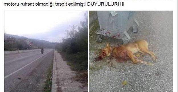 Köpeğin kuyruğunu kesen kişiye para cezası
