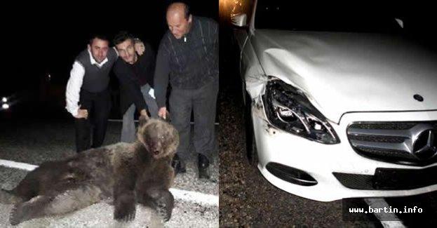 Otomobil çarpan ayı telef oldu, sürücüler fotoğraf çektirdi