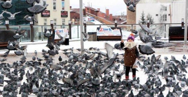 Karda yiyecek bulamayan kuşlar için 250 yemli yuva