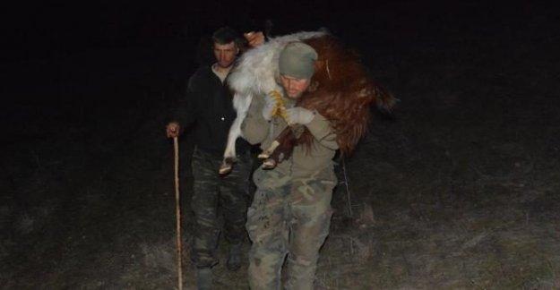 Keçiler kayalıklarda mahsur kaldı