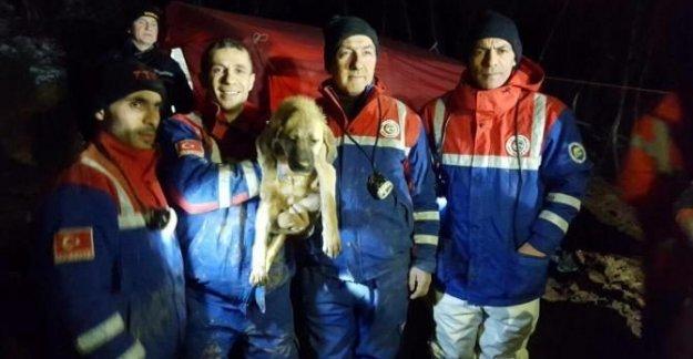 Madenciler Yavru Köpek Kuyu'yu Böyle Kurtardı